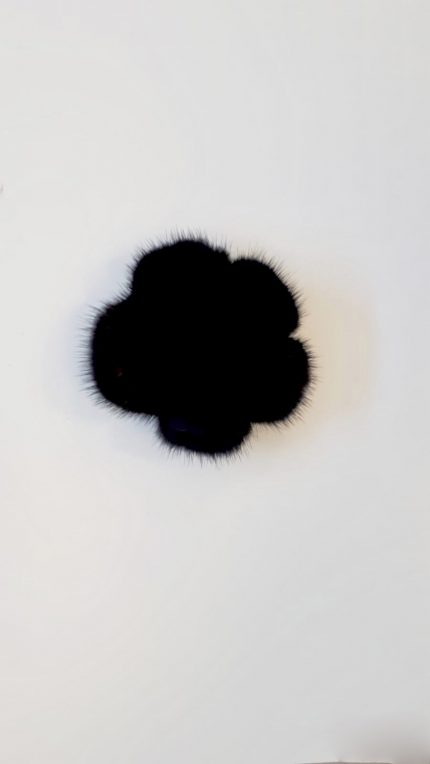 Spilla nera