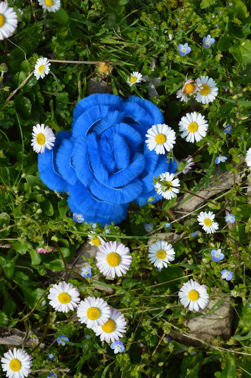 Fiore all'occhiello: spilla di pelliccia di rex colore celeste